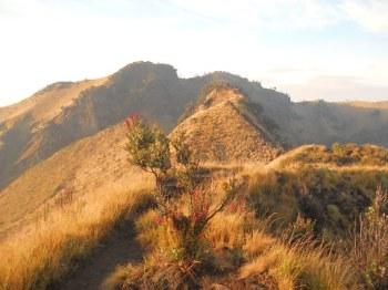 Karpet hijau keemasan, menyelimuti bukit menuju Puncak Merbabu